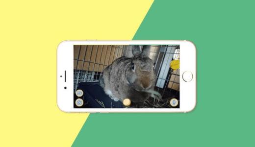 うさぎ用ペットカメラおすすめ4選|留守番中もネットワーク(WEB)カメラで見守れてば安心です。