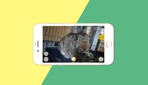 うさぎ用ペットカメラおすすめ3選|留守番中もネットワーク(WEB)カメラで見守れてば安心です。